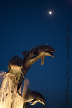 Dolphin statue with moon in background